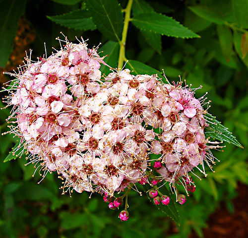 Botanical Creations Plant List